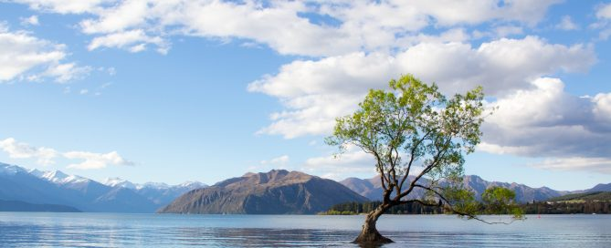 photo-of-tree-on-lake-2463951