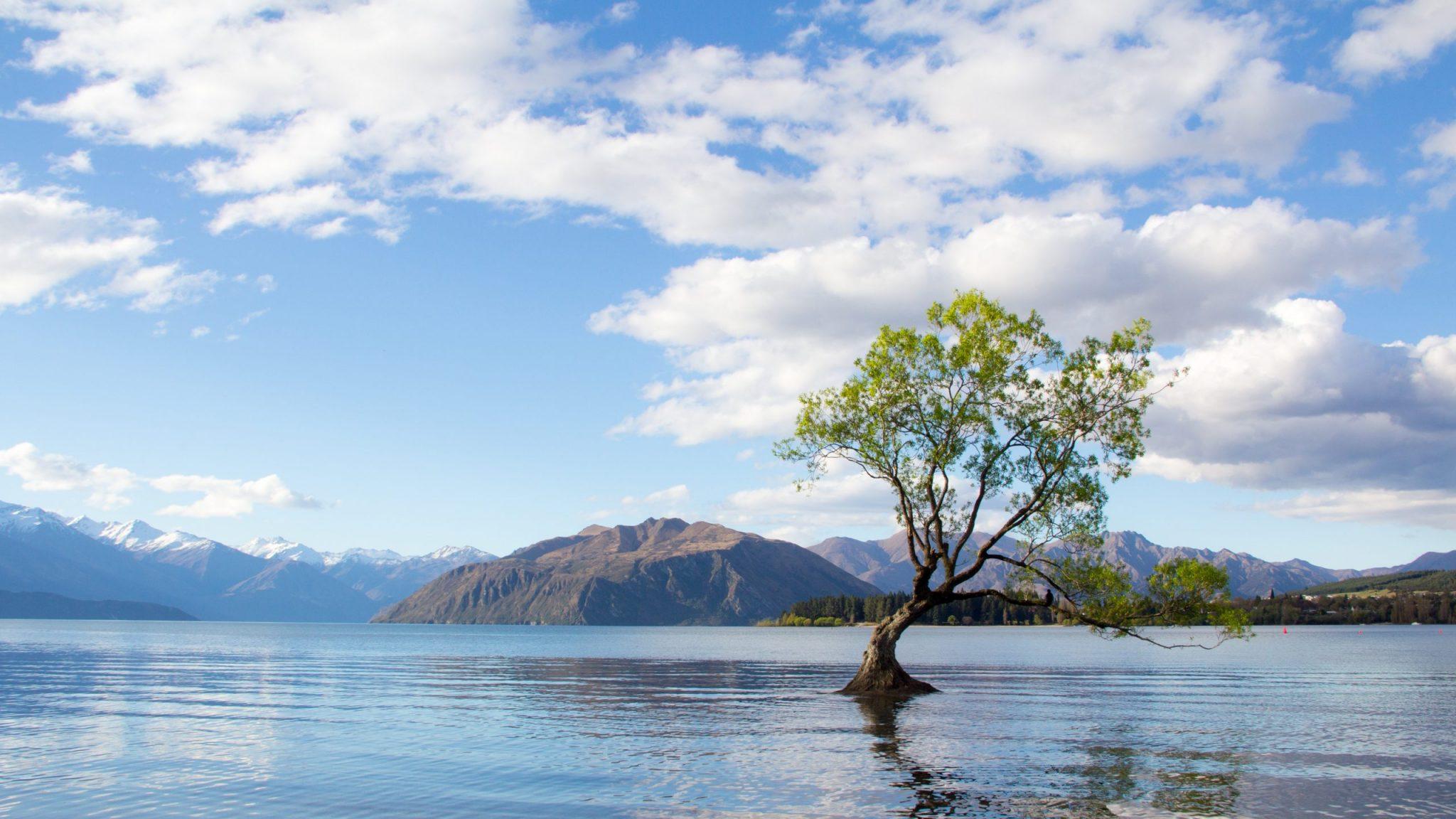 photo-of-tree-on-lake-2463951